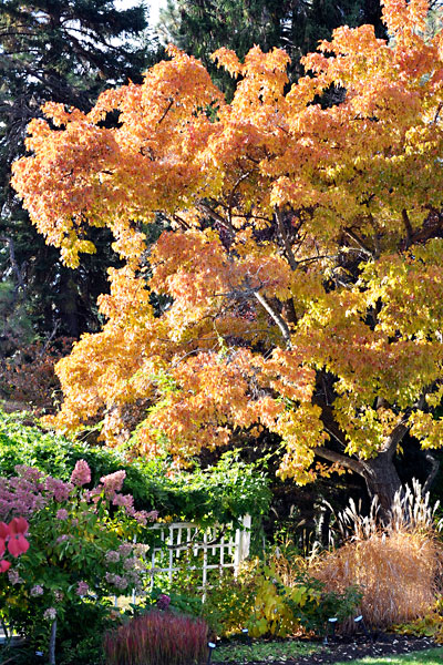 Beautiful fall view of the summerland ornamental gardens